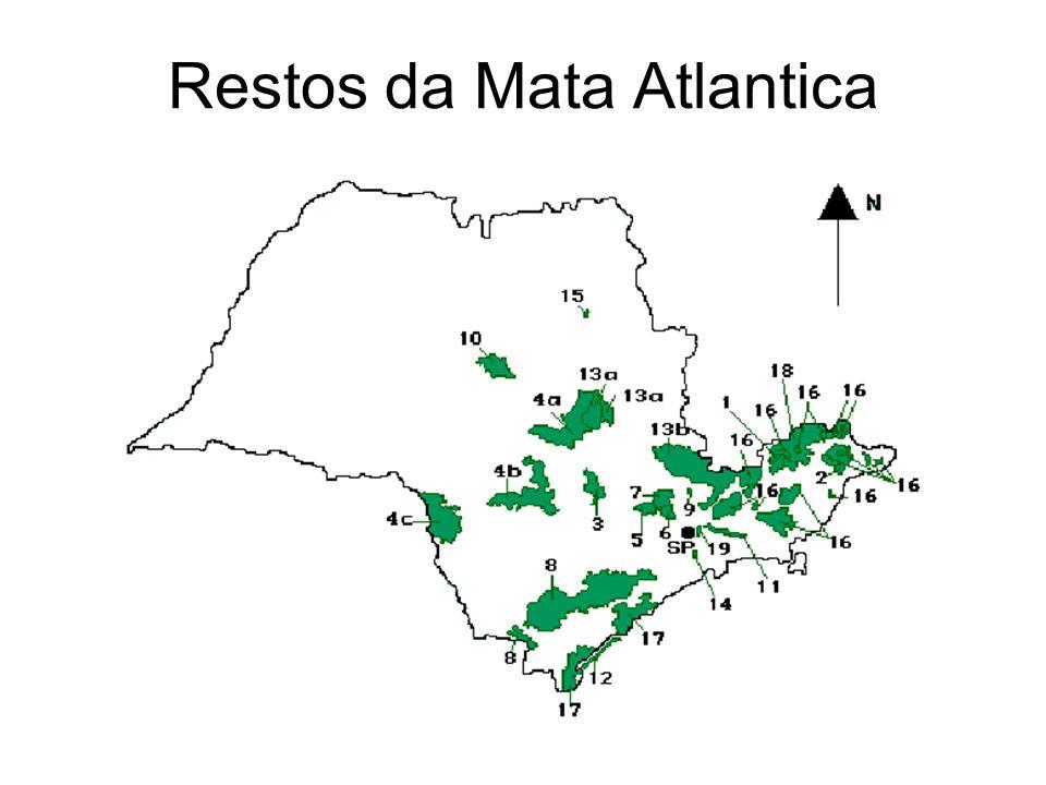 Restos da Mata Atlantica