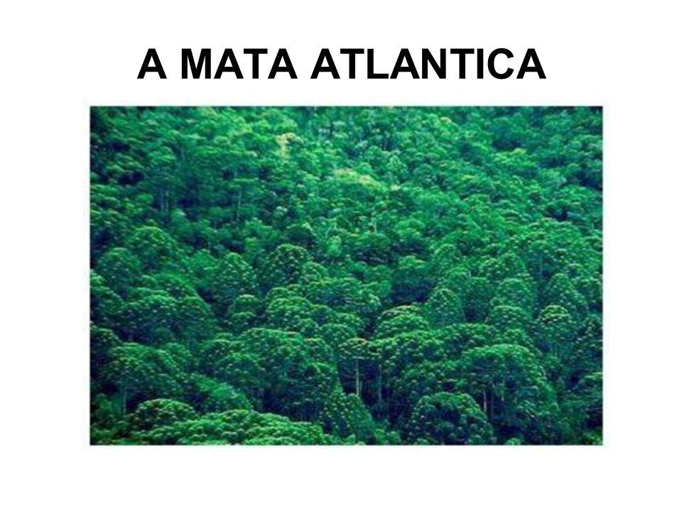 A MATA ATLANTICA