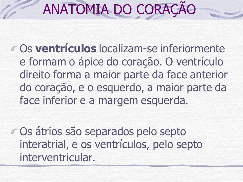 ANATOMIA DO CORAÇÃO Os ventrículos localizam-se inferiormente e formam o ápice do coração.