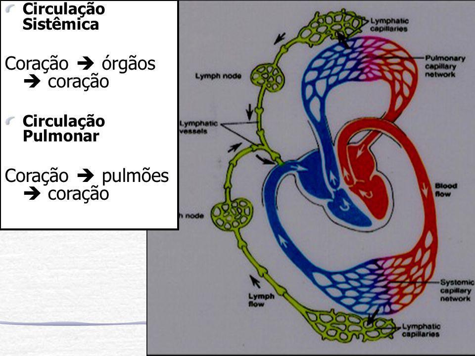 Circulação Sistêmica Coração  órgãos  coração Circulação Pulmonar Coração  pulmões  coração