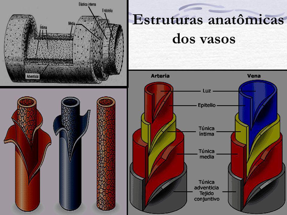 Estruturas anatômicas dos vasos