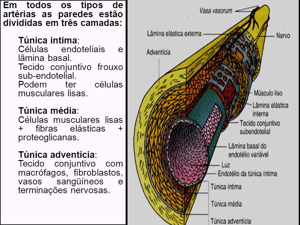 Em todos os tipos de artérias as paredes estão divididas em três camadas: Túnica intima: Células endoteliais e lâmina basal.