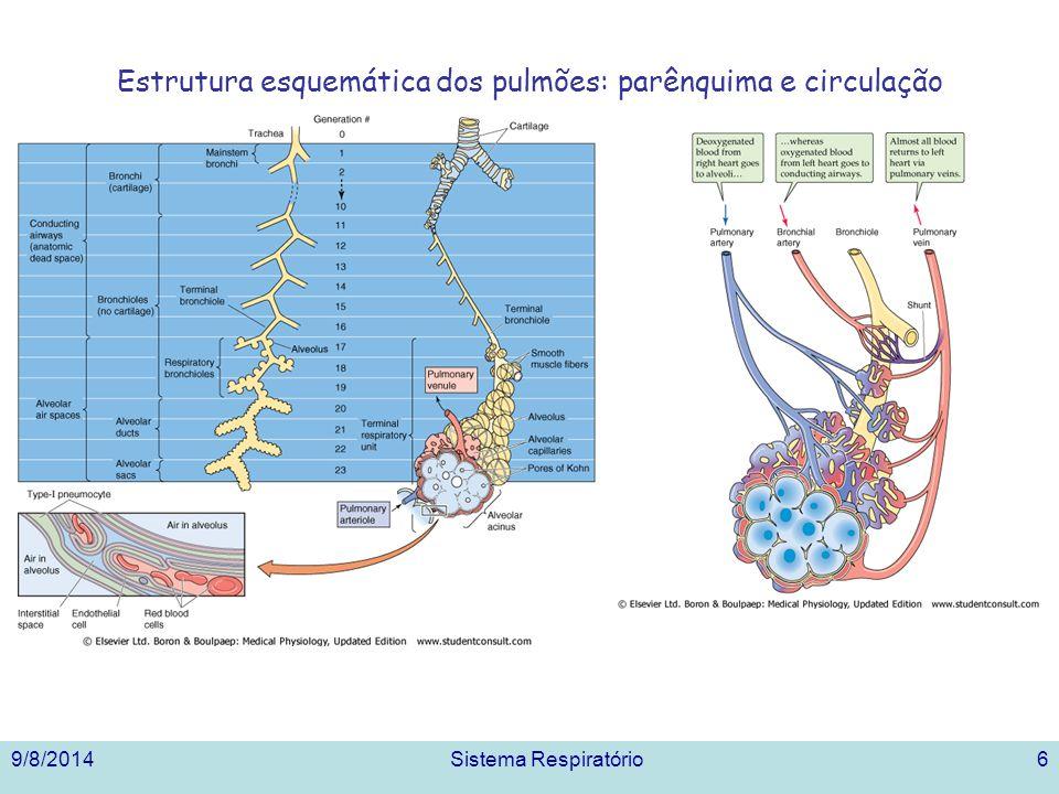 Ventilação pulmonar – Concentração alveolar dos gases 9/8/2014Sistema Respiratório17