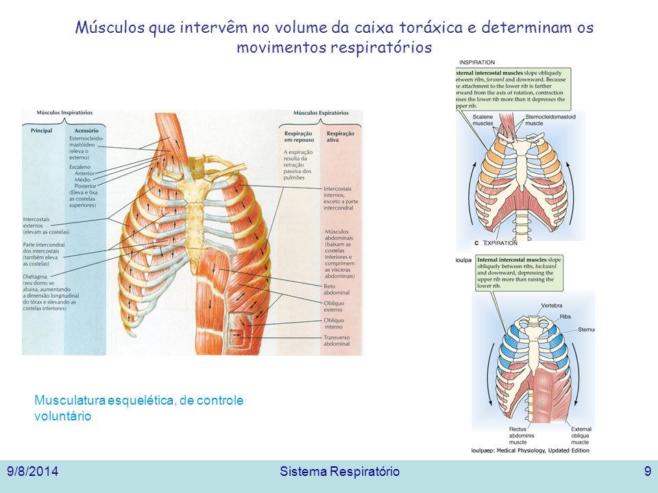 9/8/2014Sistema Respiratório9 Músculos que intervêm no volume da caixa toráxica e determinam os movimentos respiratórios Musculatura esquelética, de c