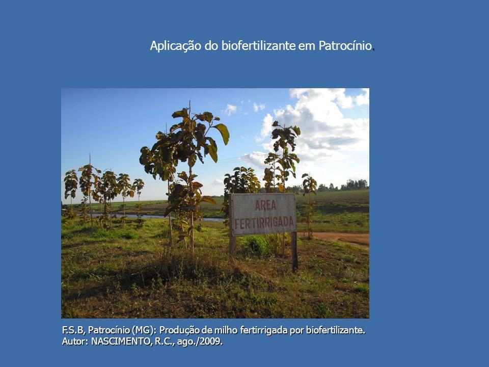 F.S.B, Patrocínio (MG): Produção de milho fertirrigada por biofertilizante. Autor: NASCIMENTO, R.C., ago./2009.. Aplicação do biofertilizante em Patro