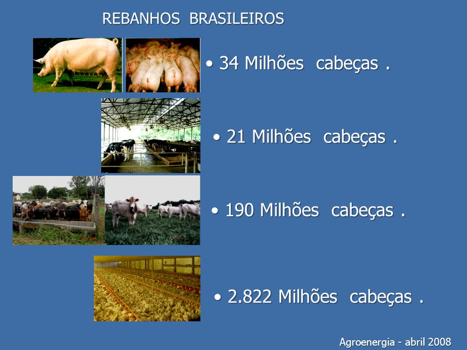 REBANHOS BRASILEIROS Agroenergia - abril 2008 34 Milhões cabeças. 34 Milhões cabeças. 21 Milhões cabeças. 21 Milhões cabeças. 190 Milhões cabeças. 190