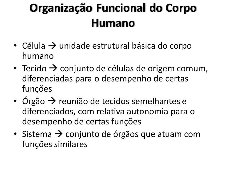 Organização Funcional do Corpo Humano Célula  unidade estrutural básica do corpo humano Tecido  conjunto de células de origem comum, diferenciadas p