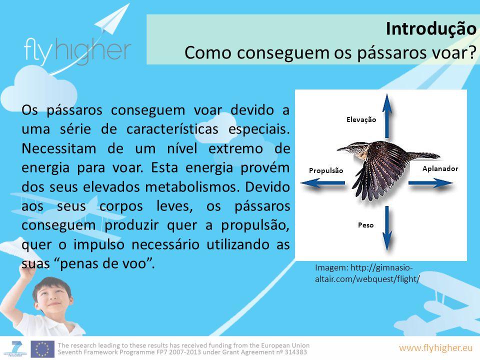 www.flyhigher.eu Os pássaros conseguem voar devido a uma série de características especiais. Necessitam de um nível extremo de energia para voar. Esta