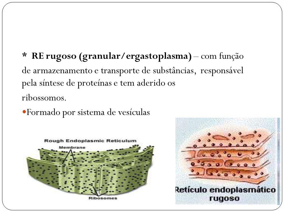 * RE rugoso (granular/ergastoplasma) – com função de armazenamento e transporte de substâncias, responsável pela síntese de proteínas e tem aderido os