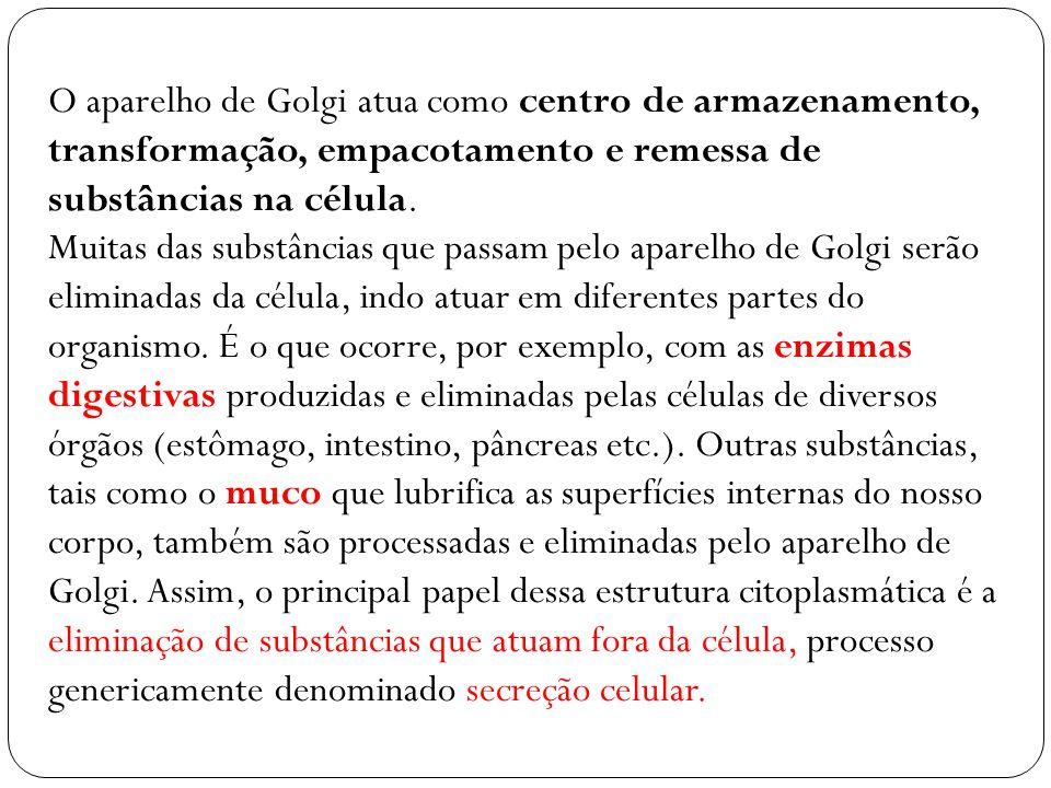 O aparelho de Golgi atua como centro de armazenamento, transformação, empacotamento e remessa de substâncias na célula. Muitas das substâncias que pas