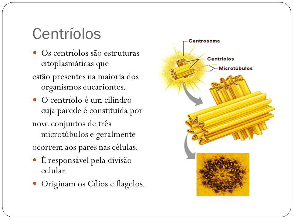Centríolos Os centríolos são estruturas citoplasmáticas que estão presentes na maioria dos organismos eucariontes. O centríolo é um cilindro cuja pare