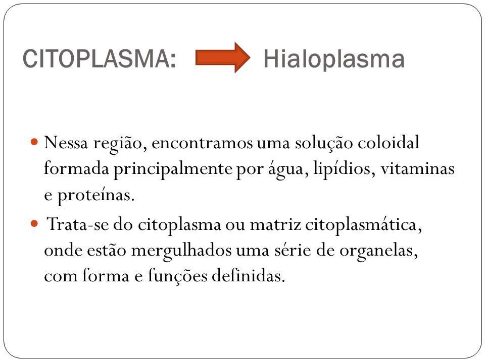 CITOPLASMA: Hialoplasma Nessa região, encontramos uma solução coloidal formada principalmente por água, lipídios, vitaminas e proteínas. Trata-se do c
