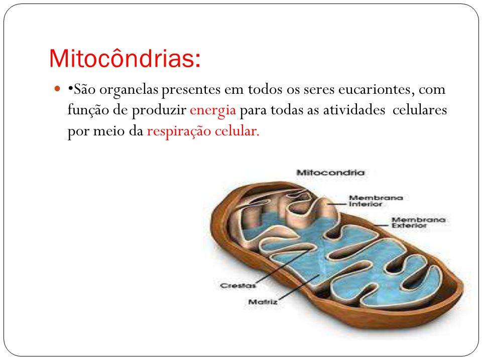 Mitocôndrias: São organelas presentes em todos os seres eucariontes, com função de produzir energia para todas as atividades celulares por meio da res
