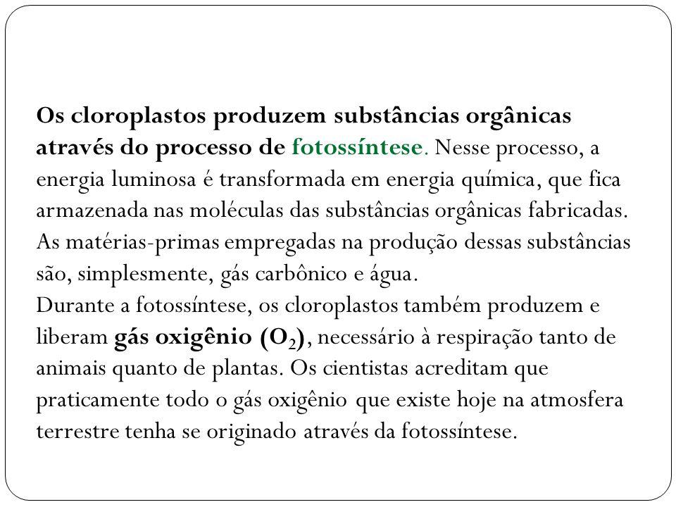 Os cloroplastos produzem substâncias orgânicas através do processo de fotossíntese. Nesse processo, a energia luminosa é transformada em energia quími