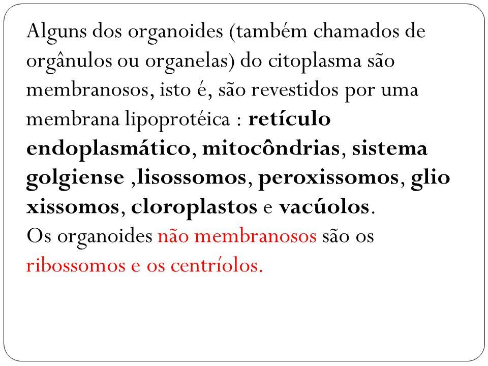 Alguns dos organoides (também chamados de orgânulos ou organelas) do citoplasma são membranosos, isto é, são revestidos por uma membrana lipoprotéica