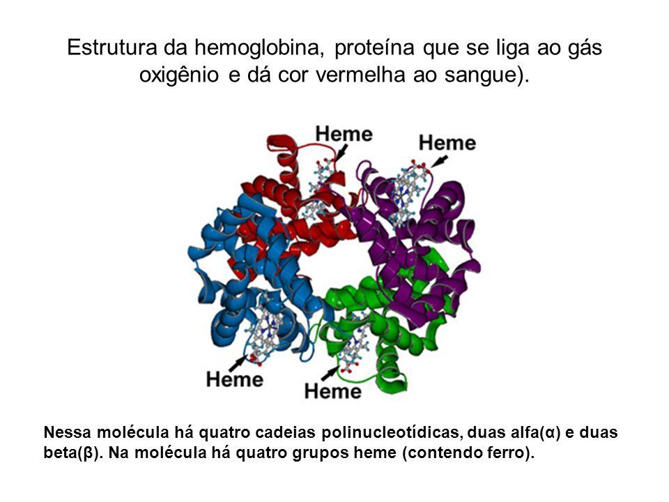 Estrutura da hemoglobina, proteína que se liga ao gás oxigênio e dá cor vermelha ao sangue). Nessa molécula há quatro cadeias polinucleotídicas, duas