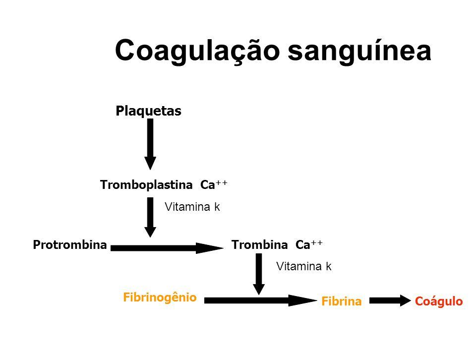 Coagulação sanguínea Plaquetas Tromboplastina Ca ++ ProtrombinaTrombina Ca ++ Fibrinogênio FibrinaCoágulo Vitamina k