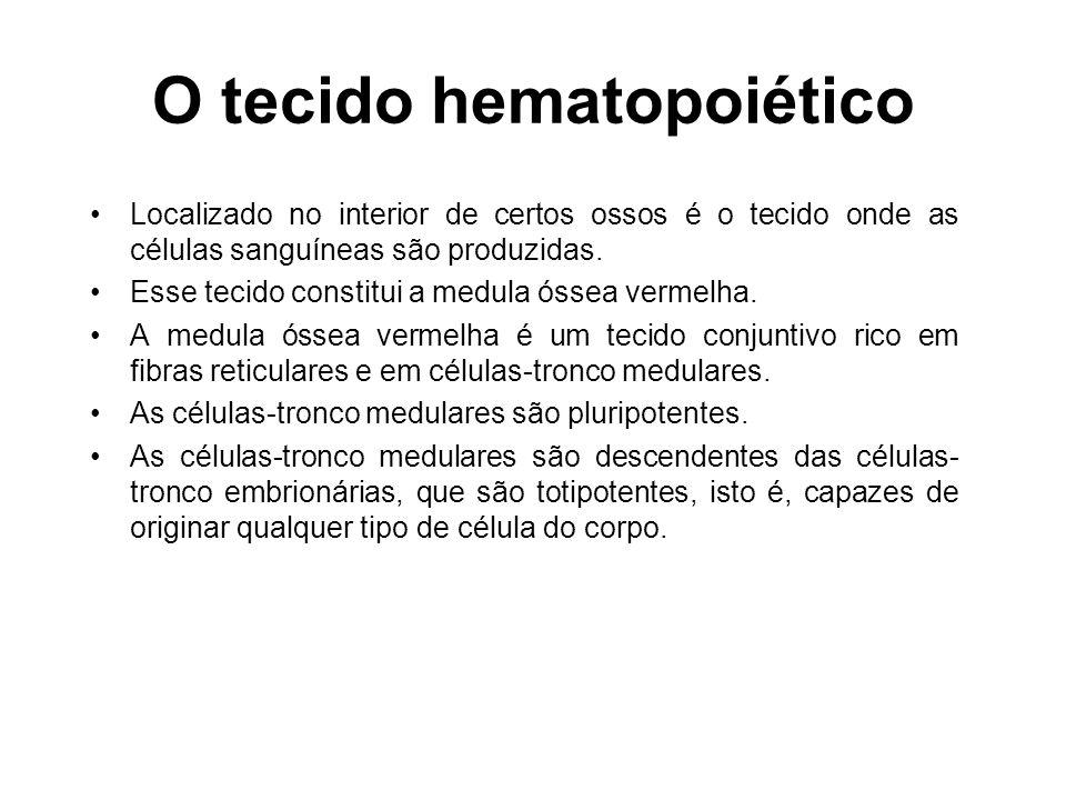 Hemocitopoese : é o processo de formação, maturação e liberação na corrente sanguínea das células do sangue.