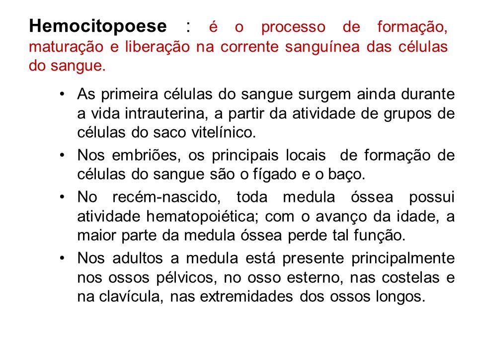 Hemocitopoese : é o processo de formação, maturação e liberação na corrente sanguínea das células do sangue. As primeira células do sangue surgem aind
