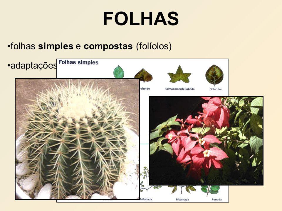 FOLHAS folhas simples e compostas (folíolos) adaptações: espinhos, gavinhas, brácteas