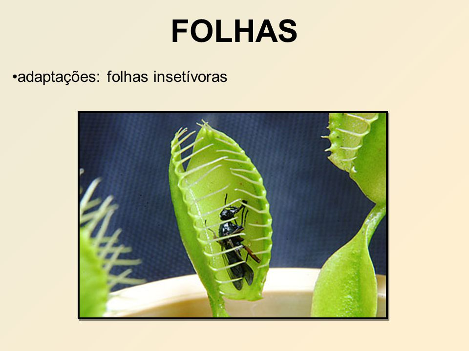 FOLHAS adaptações: folhas insetívoras