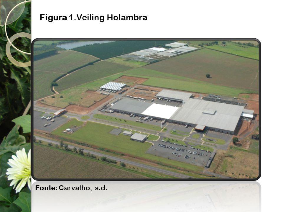 Figura 1.Veiling Holambra Fonte: Carvalho, s.d.