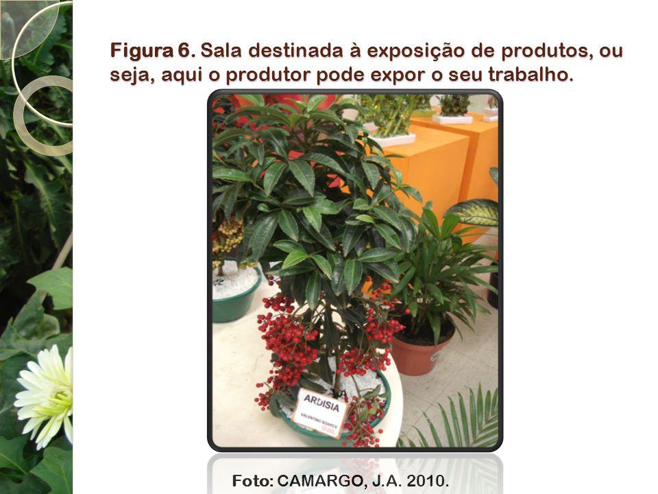 Figura 6. Sala destinada à exposição de produtos, ou seja, aqui o produtor pode expor o seu trabalho. Foto: CAMARGO, J.A. 2010.