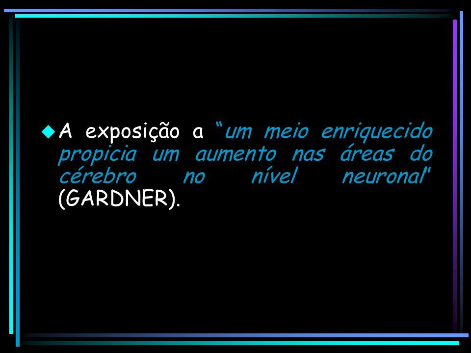 """ A exposição a """"um meio enriquecido propicia um aumento nas áreas do cérebro no nível neuronal"""" (GARDNER)."""