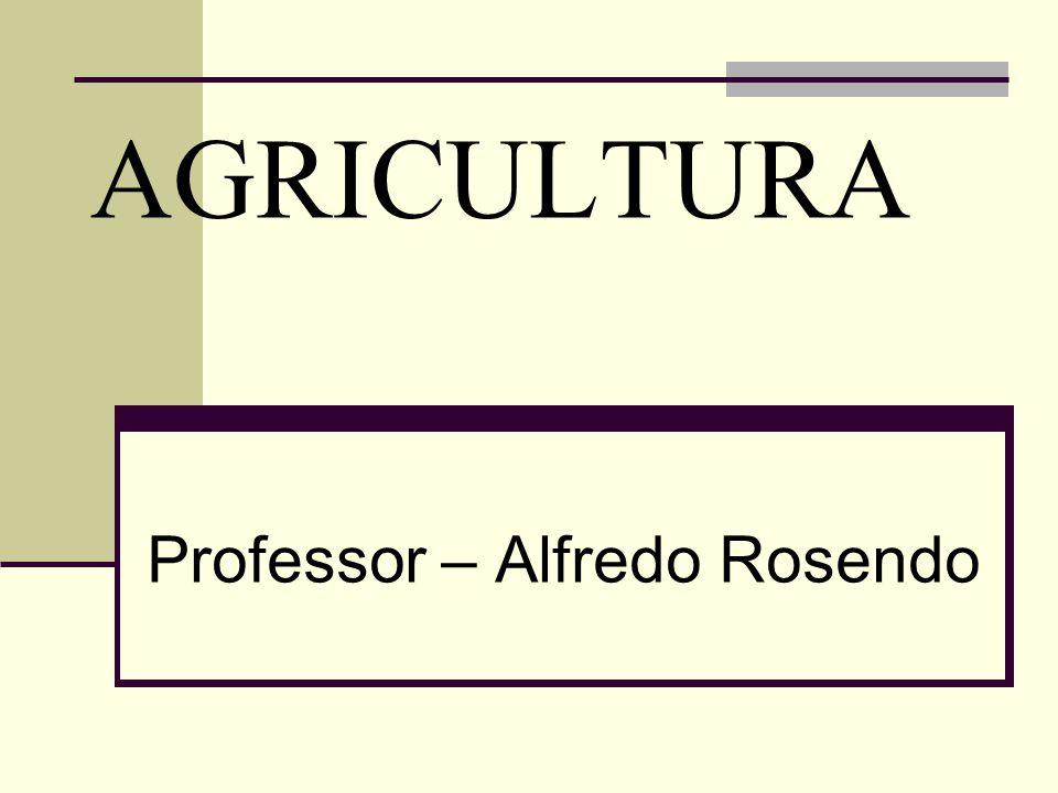 AGRICULTURA Professor – Alfredo Rosendo