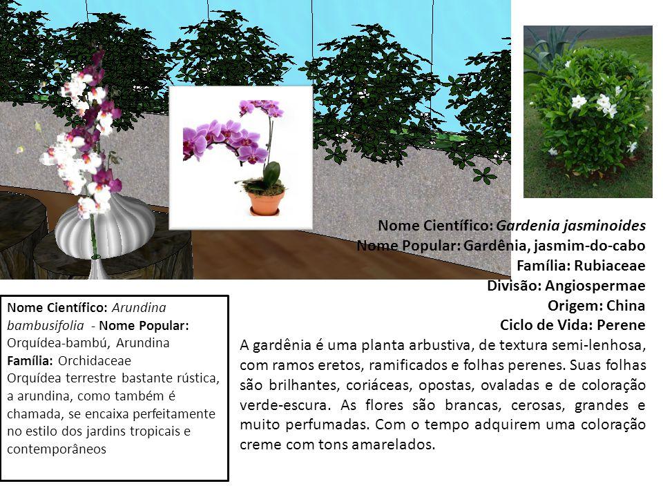 Nome Científico: Gardenia jasminoides Nome Popular: Gardênia, jasmim-do-cabo Família: Rubiaceae Divisão: Angiospermae Origem: China Ciclo de Vida: Perene A gardênia é uma planta arbustiva, de textura semi-lenhosa, com ramos eretos, ramificados e folhas perenes.