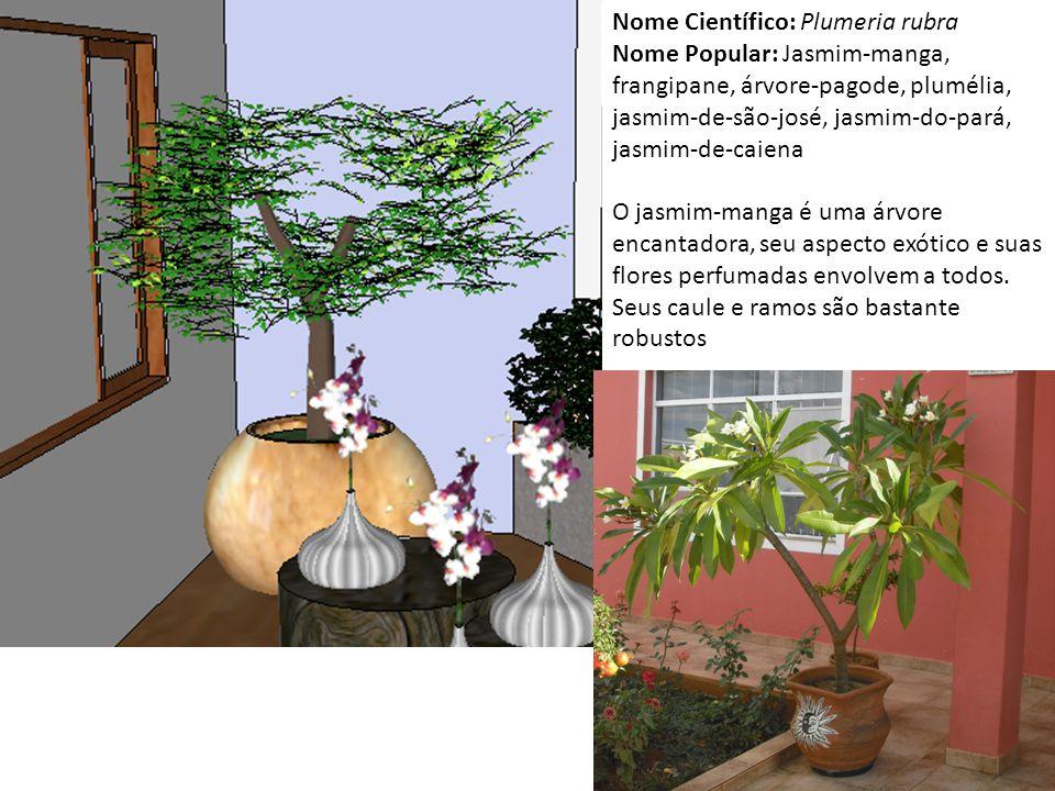 Nome Científico: Plumeria rubra Nome Popular: Jasmim-manga, frangipane, árvore-pagode, plumélia, jasmim-de-são-josé, jasmim-do-pará, jasmim-de-caiena O jasmim-manga é uma árvore encantadora, seu aspecto exótico e suas flores perfumadas envolvem a todos.