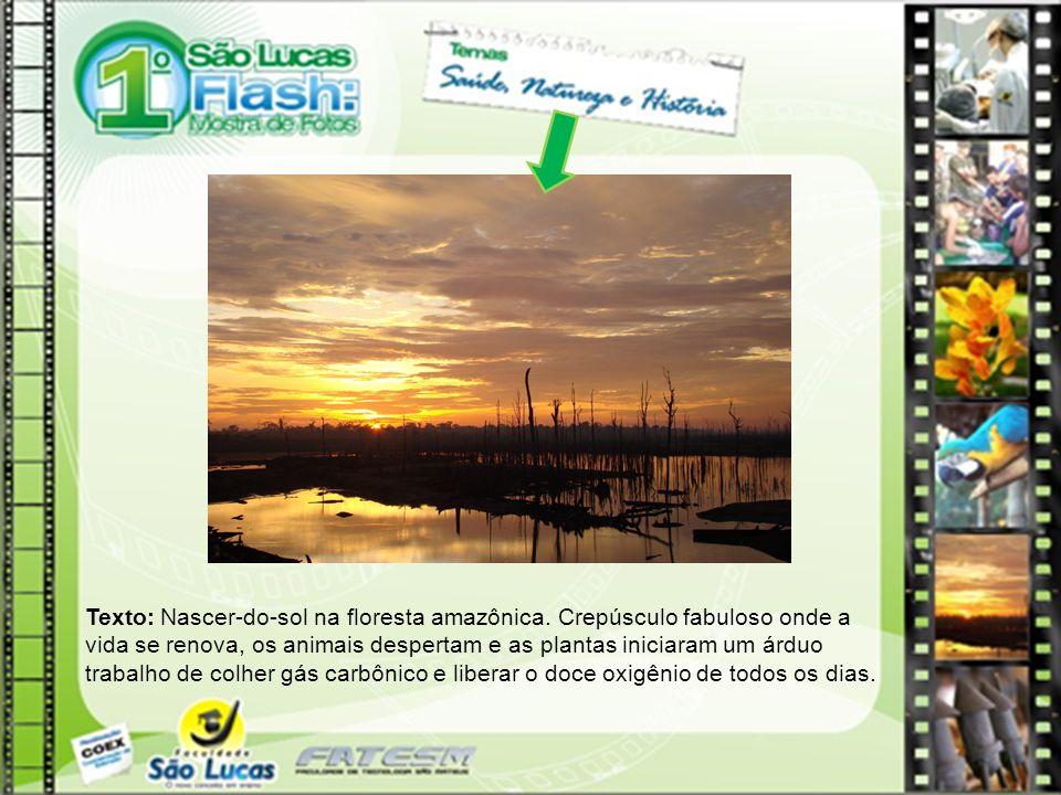 Texto: Nascer-do-sol na floresta amazônica. Crepúsculo fabuloso onde a vida se renova, os animais despertam e as plantas iniciaram um árduo trabalho d