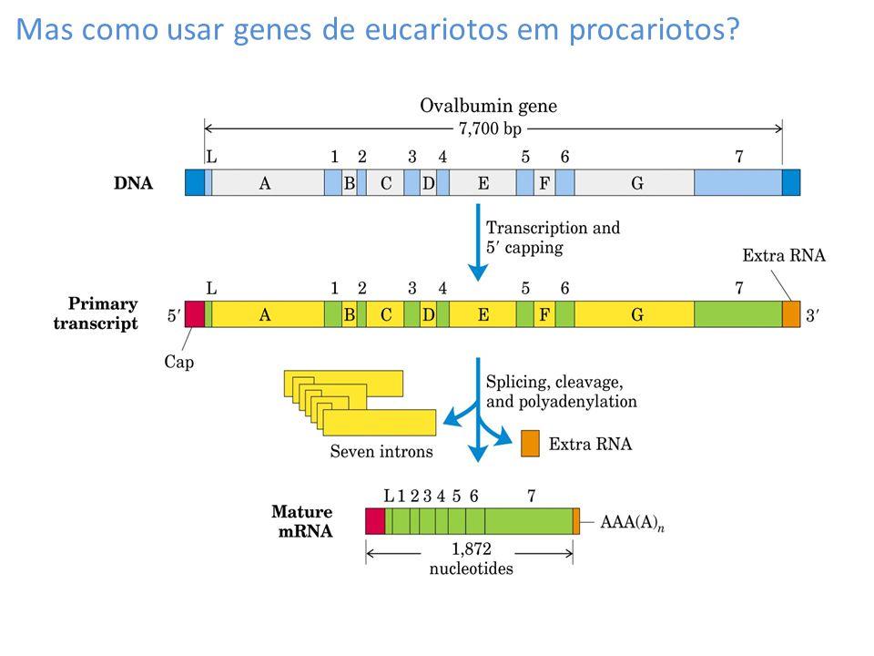 Mas como usar genes de eucariotos em procariotos?