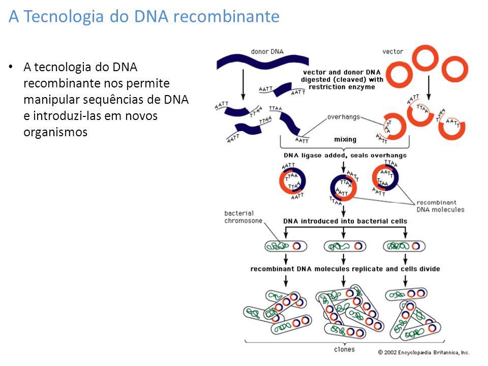 A Tecnologia do DNA recombinante A tecnologia do DNA recombinante nos permite manipular sequências de DNA e introduzi-las em novos organismos