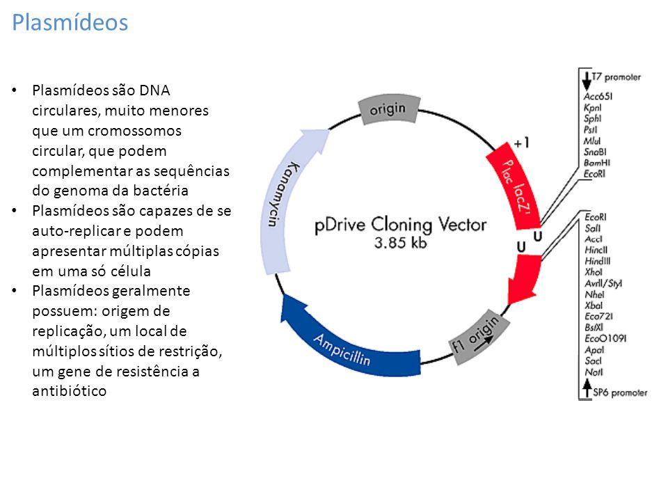 Plasmídeos Plasmídeos são DNA circulares, muito menores que um cromossomos circular, que podem complementar as sequências do genoma da bactéria Plasmí