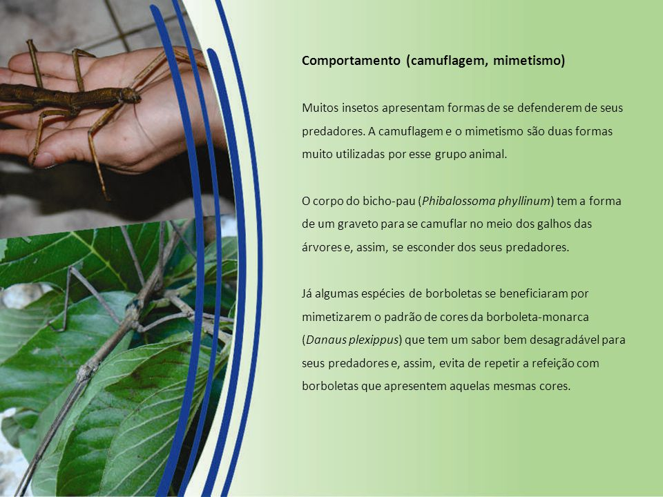 Comportamento (camuflagem, mimetismo) Muitos insetos apresentam formas de se defenderem de seus predadores.