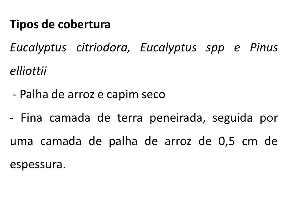 Tipos de cobertura Eucalyptus citriodora, Eucalyptus spp e Pinus elliottii - Palha de arroz e capim seco - Fina camada de terra peneirada, seguida por