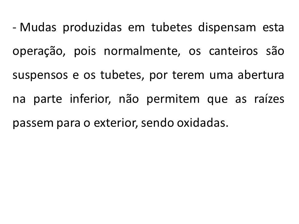 - Mudas produzidas em tubetes dispensam esta operação, pois normalmente, os canteiros são suspensos e os tubetes, por terem uma abertura na parte infe