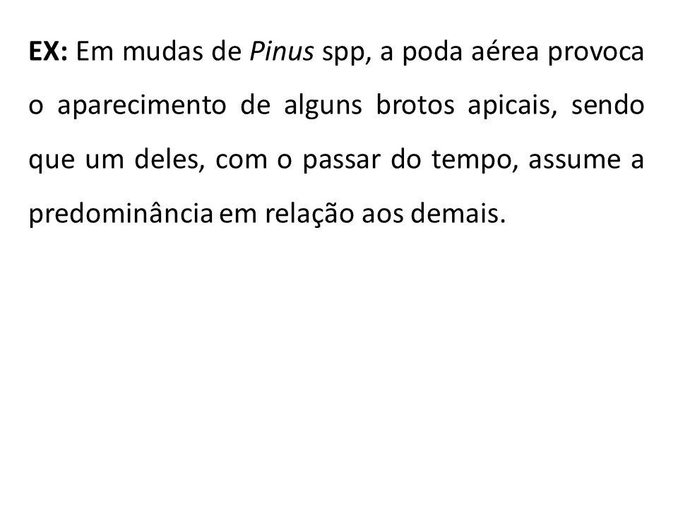 EX: Em mudas de Pinus spp, a poda aérea provoca o aparecimento de alguns brotos apicais, sendo que um deles, com o passar do tempo, assume a predominâ