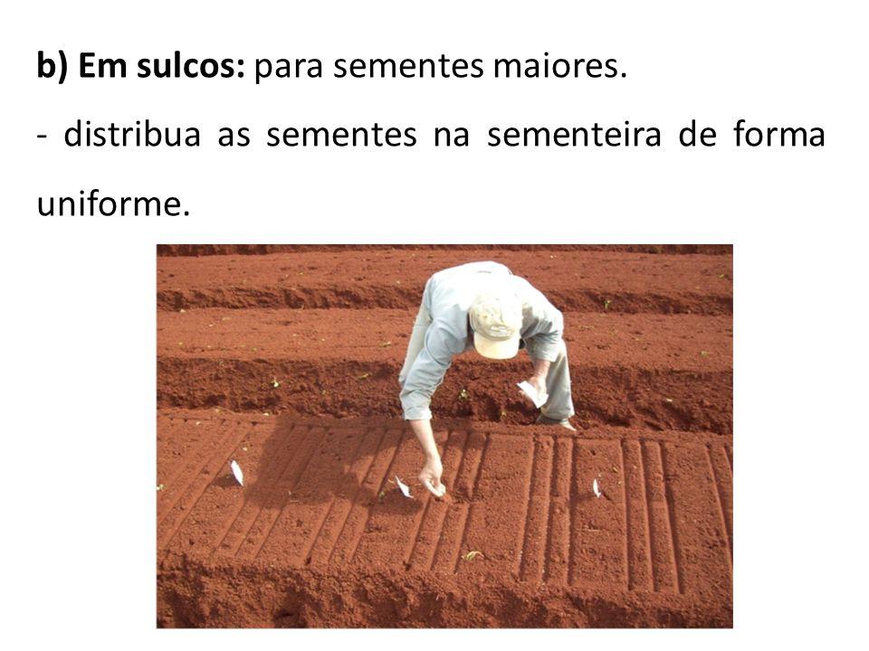 b) Em sulcos: para sementes maiores. - distribua as sementes na sementeira de forma uniforme.