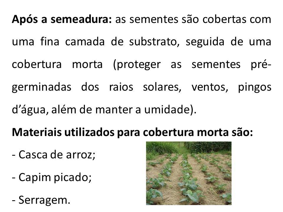 Após a semeadura: as sementes são cobertas com uma fina camada de substrato, seguida de uma cobertura morta (proteger as sementes pré- germinadas dos