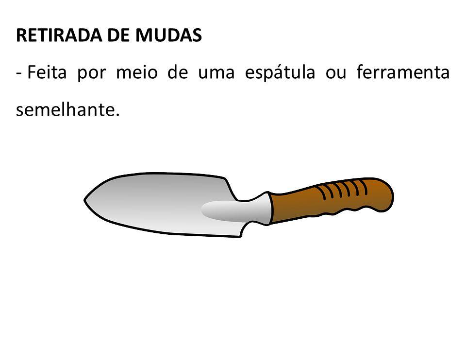 RETIRADA DE MUDAS - Feita por meio de uma espátula ou ferramenta semelhante.