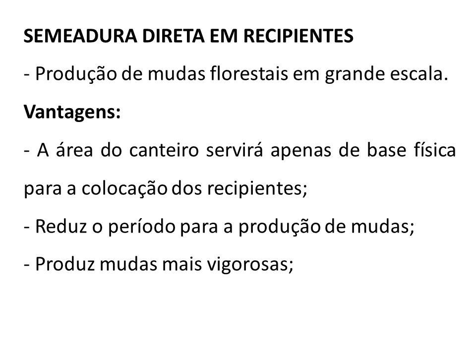 SEMEADURA DIRETA EM RECIPIENTES - Produção de mudas florestais em grande escala. Vantagens: - A área do canteiro servirá apenas de base física para a