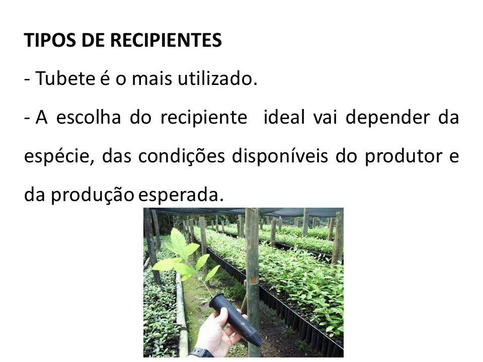TIPOS DE RECIPIENTES - Tubete é o mais utilizado. - A escolha do recipiente ideal vai depender da espécie, das condições disponíveis do produtor e da