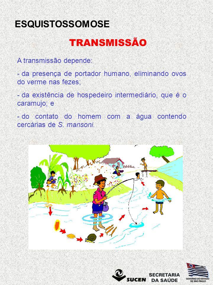 ESQUISTOSSOMOSE TRANSMISSÃO A transmissão depende: - da presença de portador humano, eliminando ovos do verme nas fezes; - da existência de hospedeiro