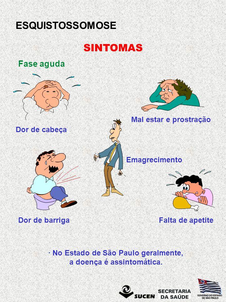 ESQUISTOSSOMOSE SINTOMAS Fase aguda Dor de cabeça Mal estar e prostração Emagrecimento Dor de barrigaFalta de apetite · No Estado de São Paulo geralme