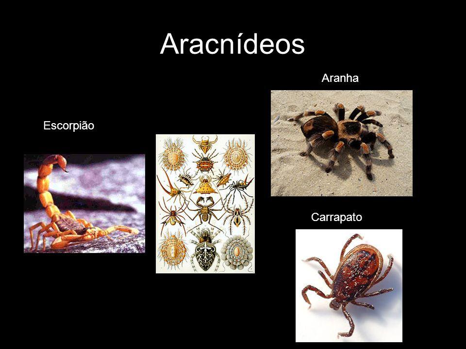 Aracnídeos Aranha Carrapato Escorpião