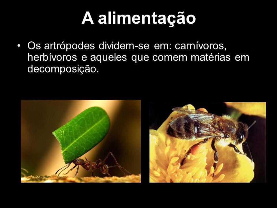 A alimentação Os artrópodes dividem-se em: carnívoros, herbívoros e aqueles que comem matérias em decomposição.