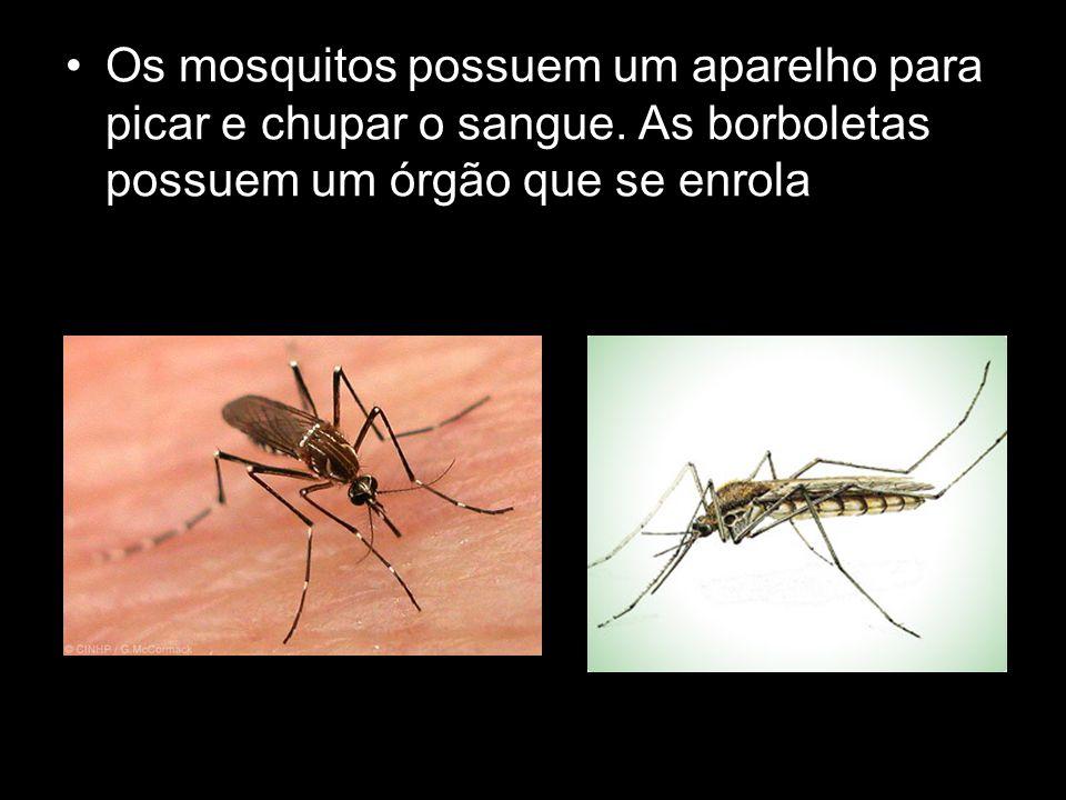 Os mosquitos possuem um aparelho para picar e chupar o sangue. As borboletas possuem um órgão que se enrola