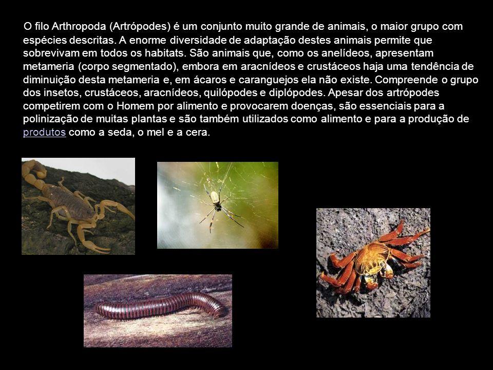 O filo Arthropoda (Artrópodes) é um conjunto muito grande de animais, o maior grupo com espécies descritas. A enorme diversidade de adaptação destes a
